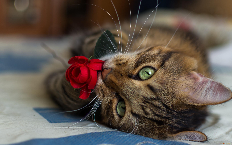 внимании котята с цветами картинки даже